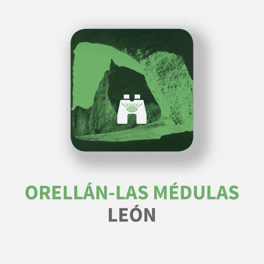 leon_medulas